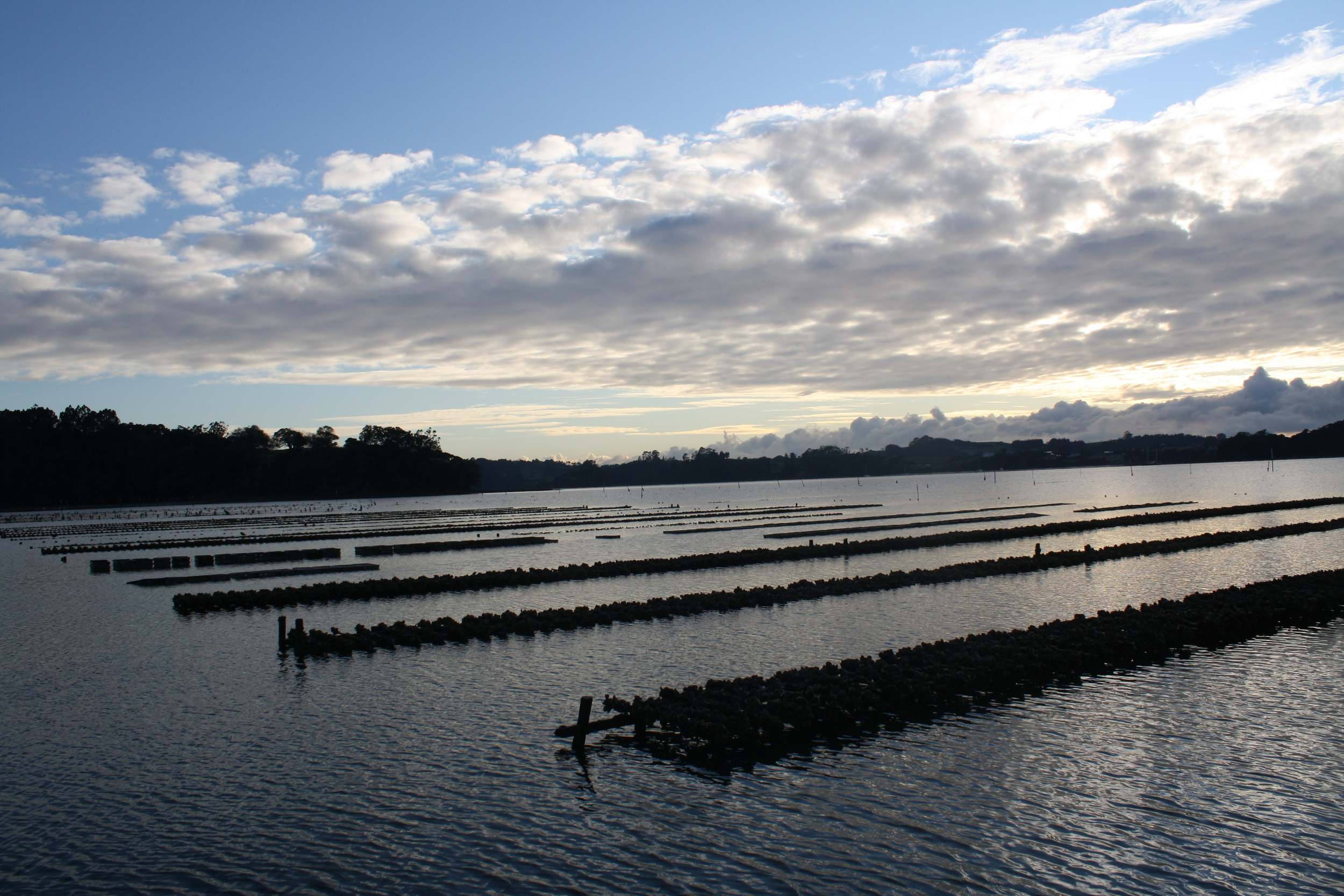 Oyster farm in the Mahurangi estuary