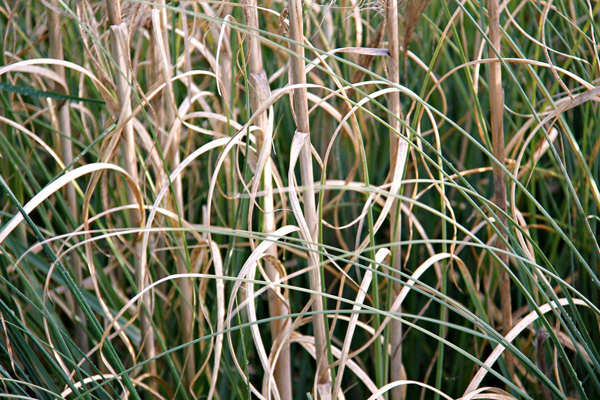 Weeds_8_Lekha_Singh_2016.jpg