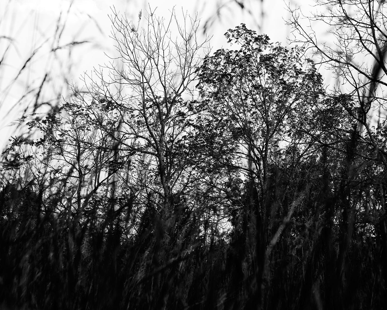 Grass and Trees, Baldwin City, Kansas, 2017