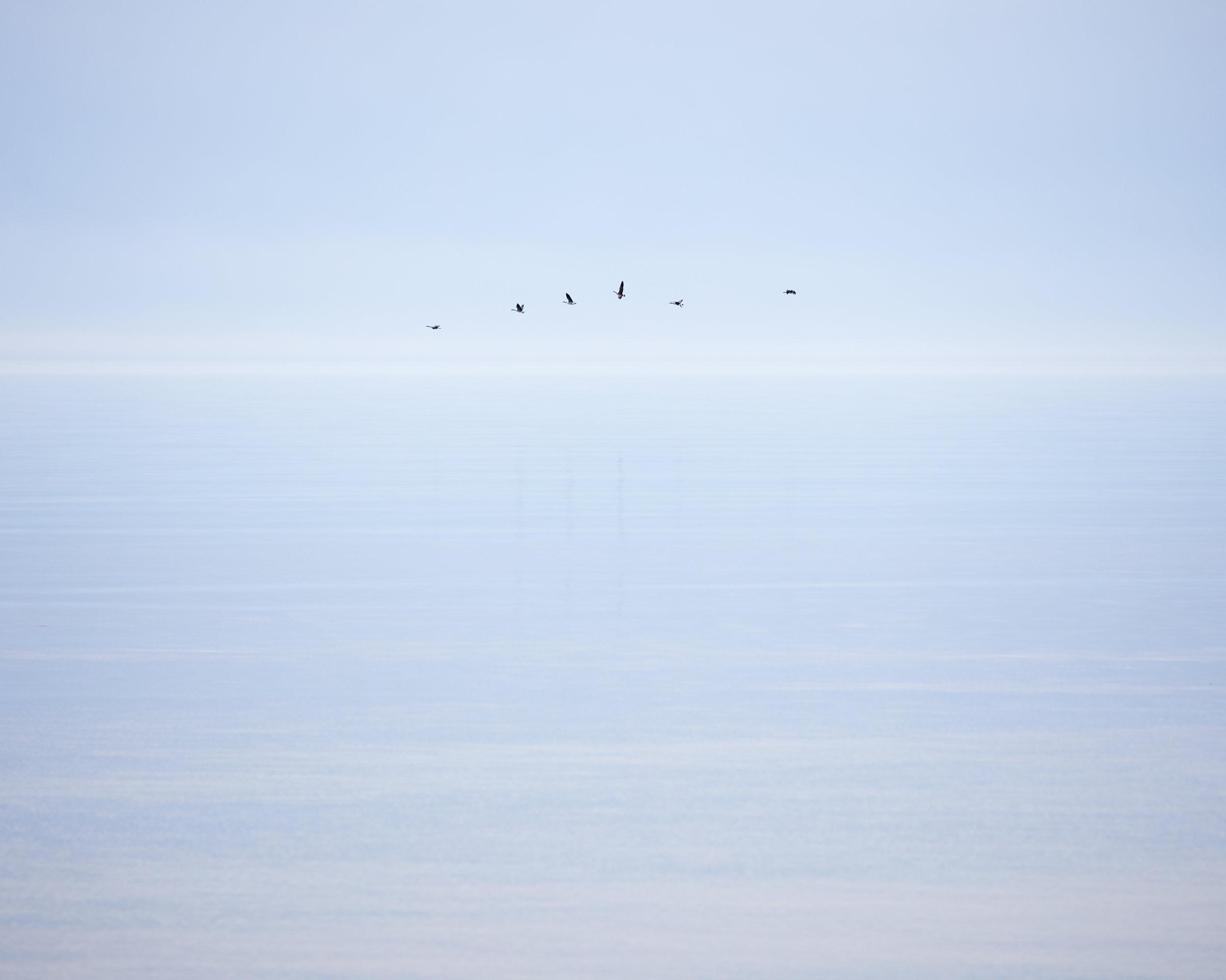 Six Geese, Algoma, Wisconsin, 2017