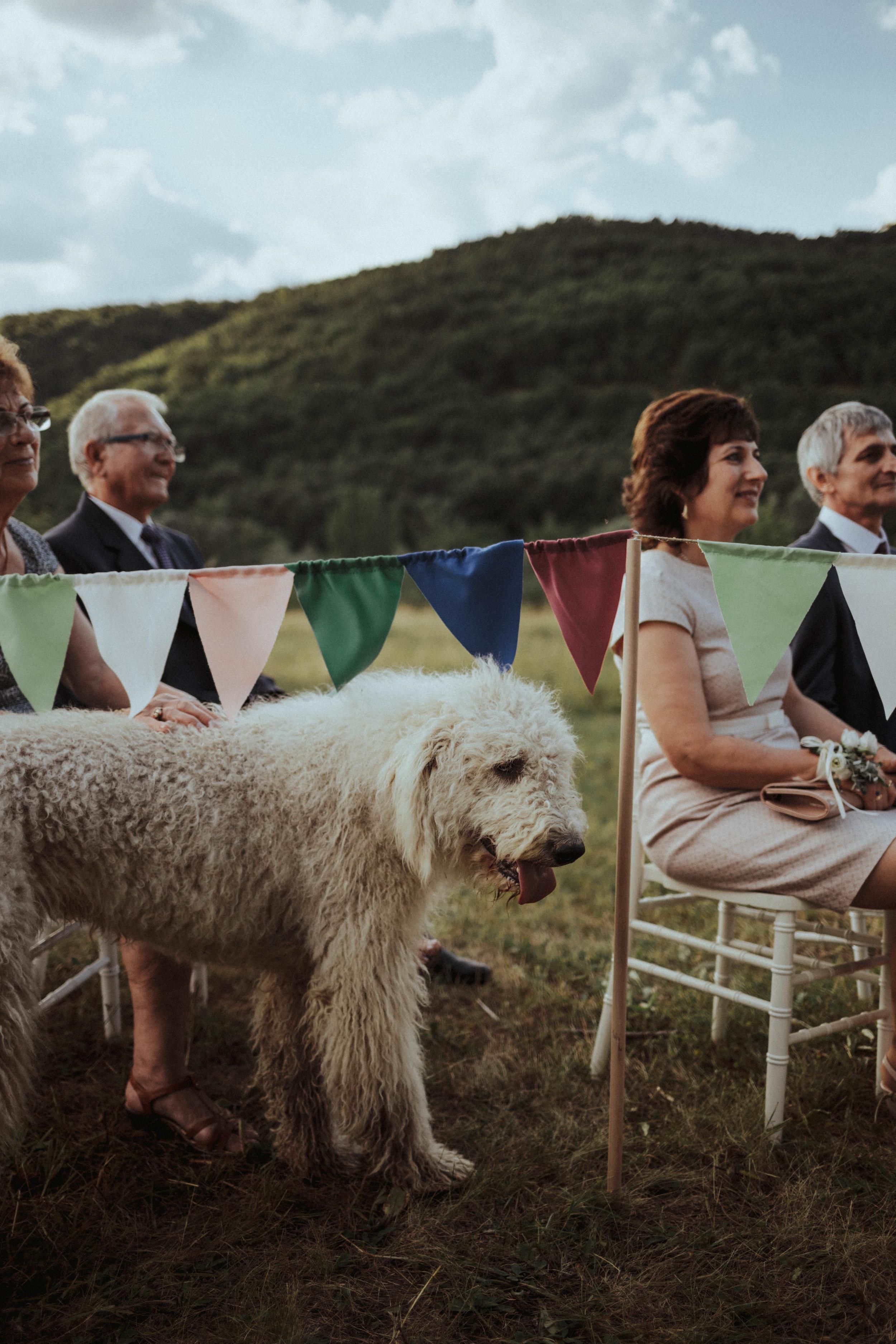 20170701_Lilla+Tomi_wedding_w_423__MG_3596.jpg