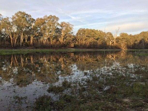 Natural Resources SAMDB have opened Ngak Indau Wetland for a drink. There should be plenty of birds in and around Ngak Indau, so why not pop out there and take advantage of the new bird hide. #samdb #birds #rivermurray
