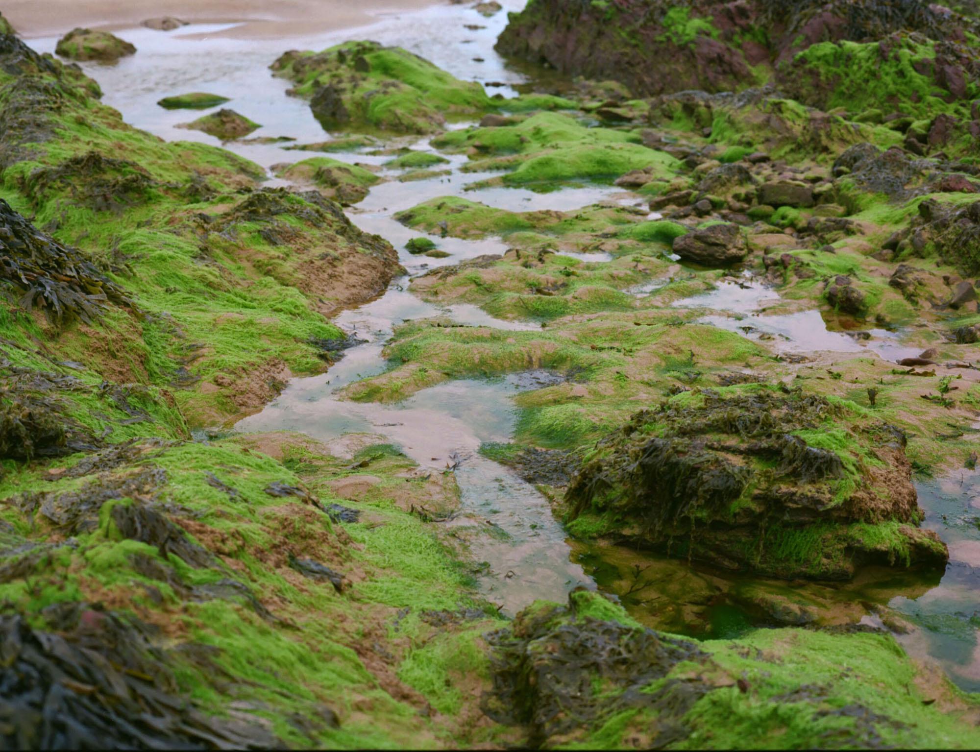 PembrokeshireBeachfood28.jpg