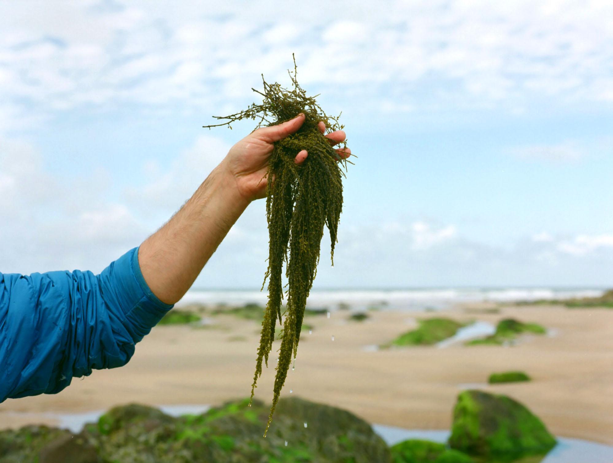 PembrokeshireBeachfood07.jpg