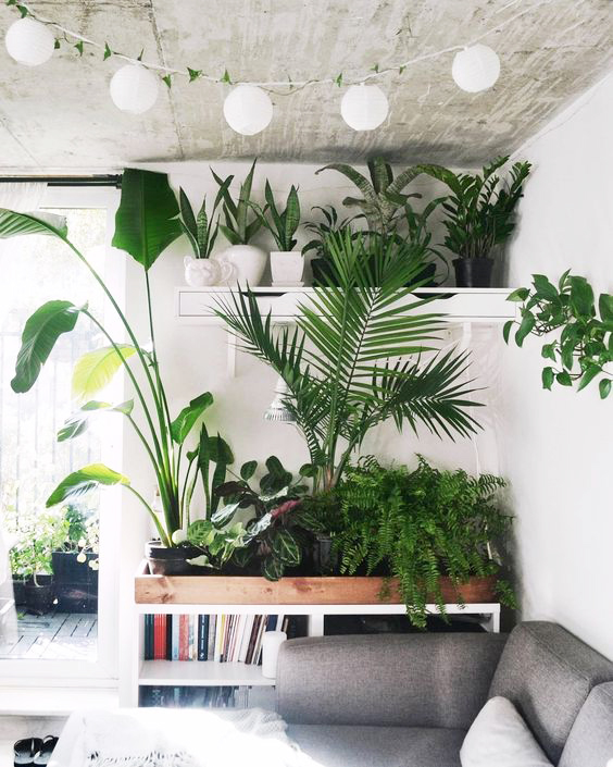 The same Boston fern plant used along with palms and succulents, creating a fuller more decorative corner.