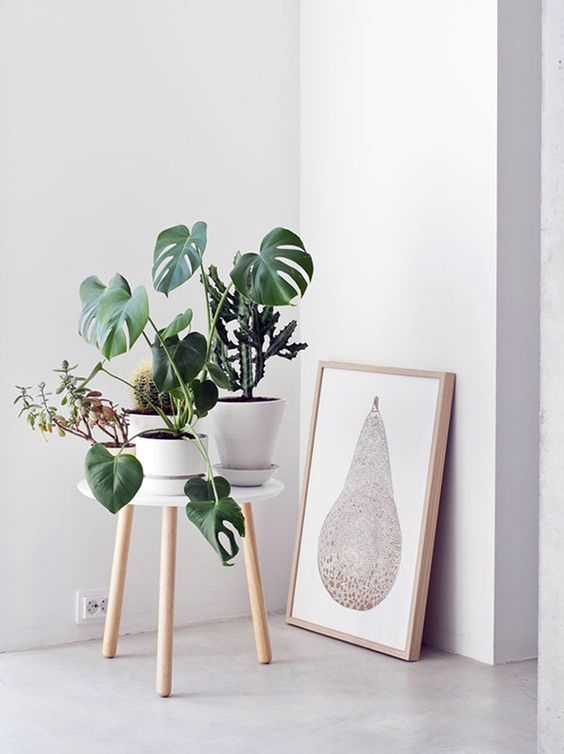 Who doesent love a simple pine wood legged stool with an assortment of beautiful plants to create a more interesting corner.