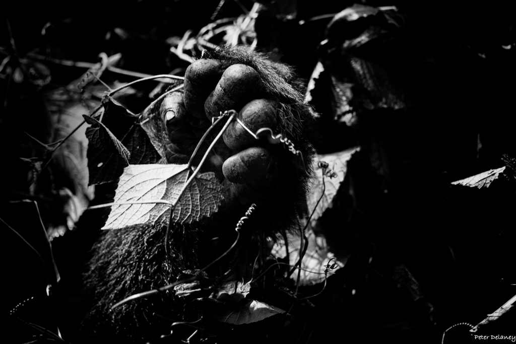 bwindi-gorillas--05.jpg