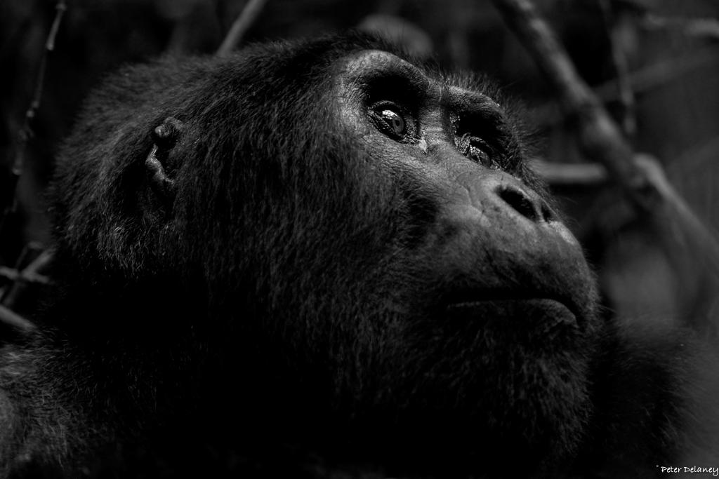 bwindi-gorillas--04.jpg