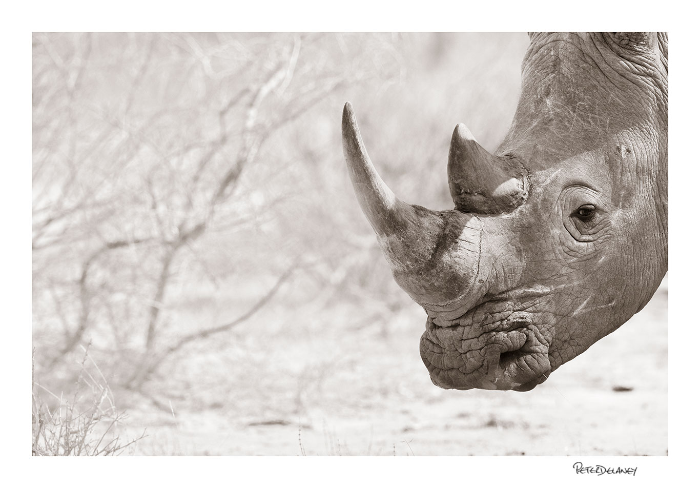 Marathaba+White+Rhino.jpg
