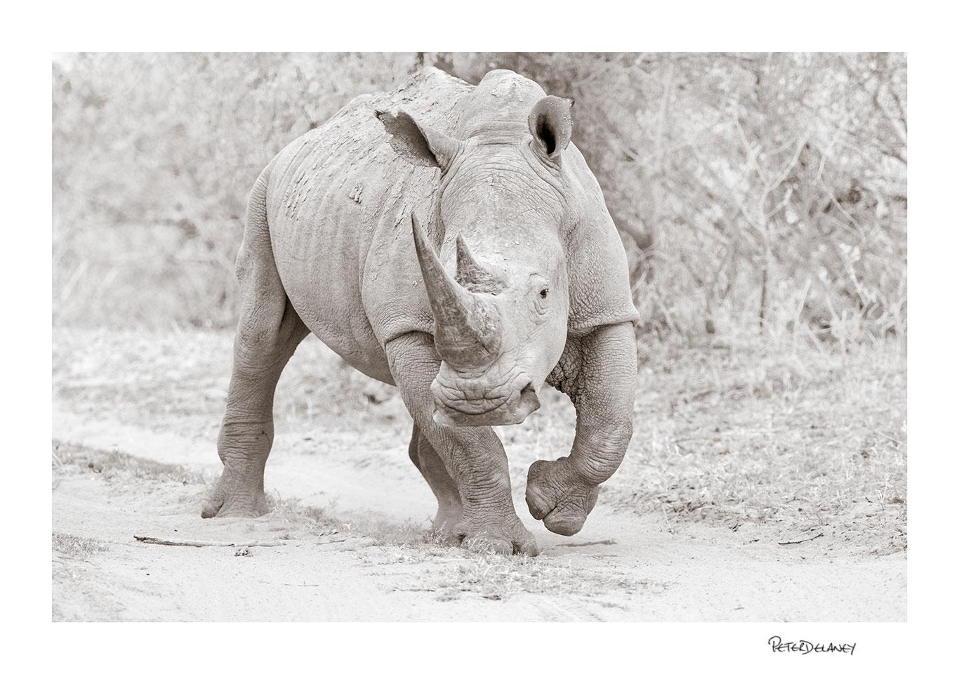 White+Rhino+Marathaba.jpg