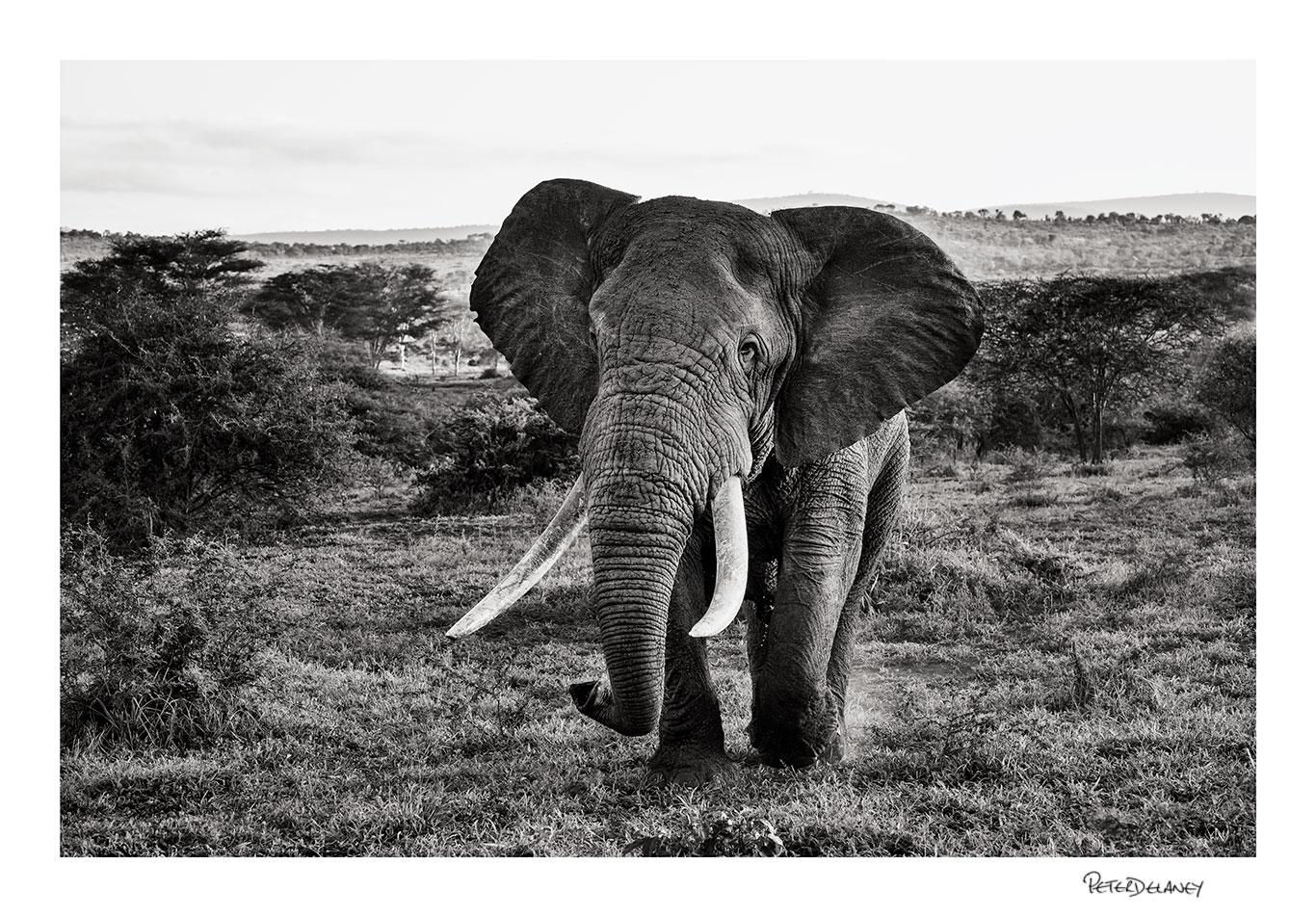 Zimanga+Tusker.jpg