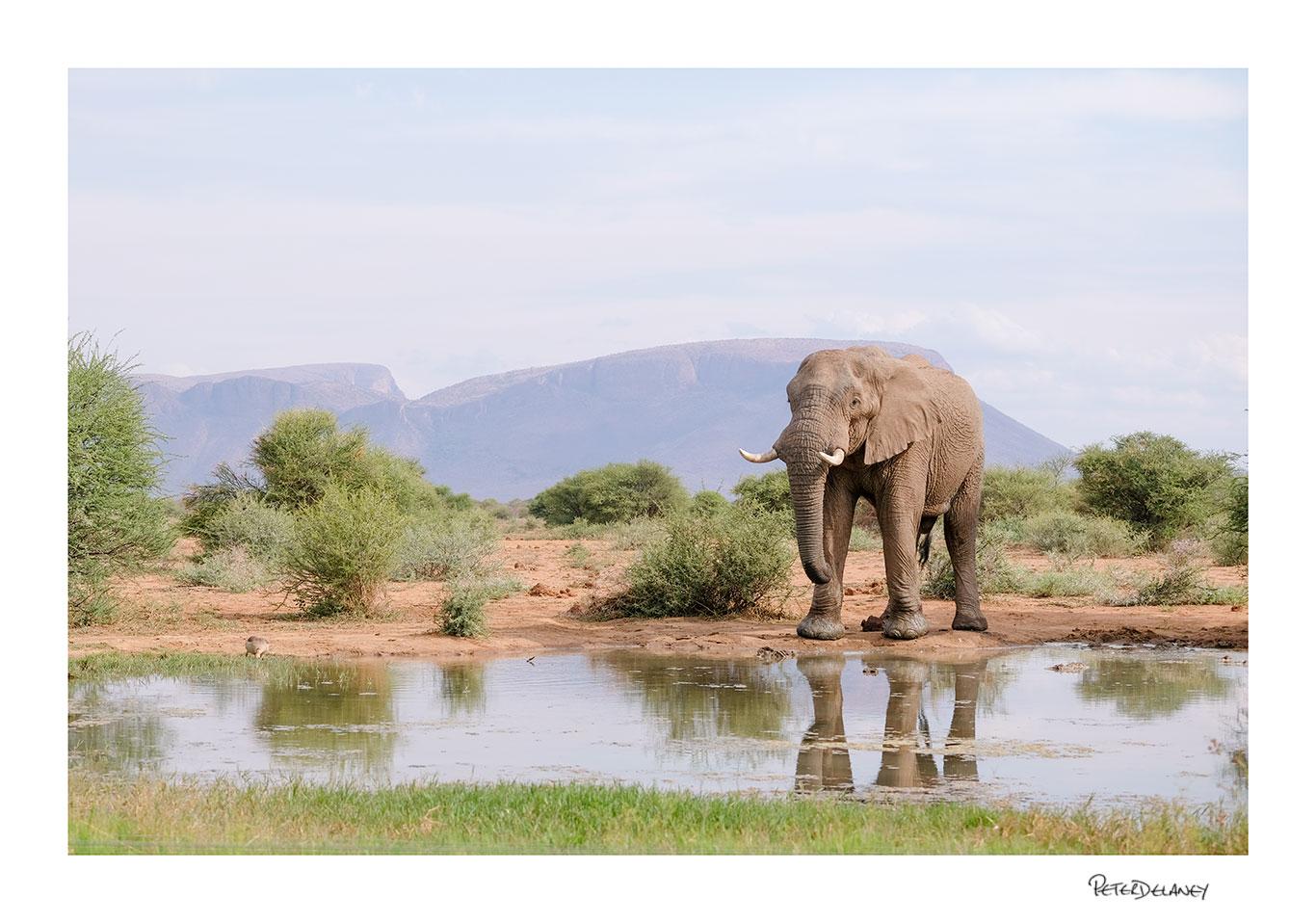 Marataba Bull Elephant