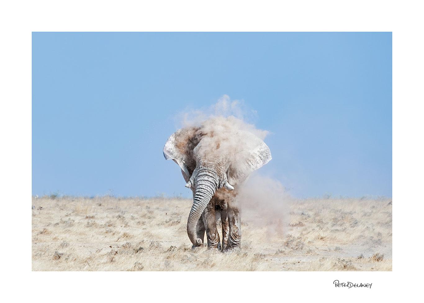 Godfather Bull Elephant