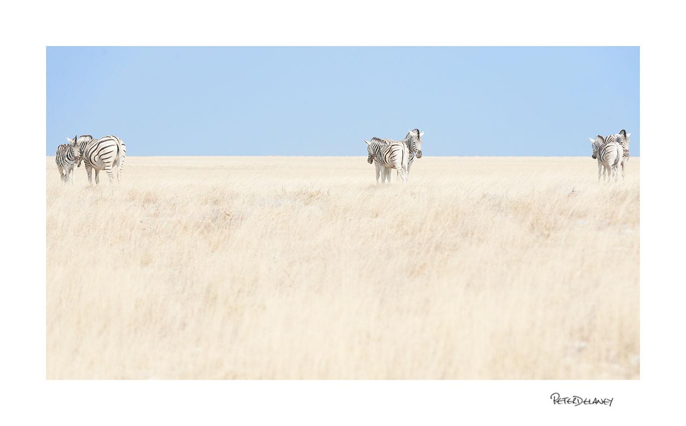 no-18-zebra-standing-in-grass.jpg