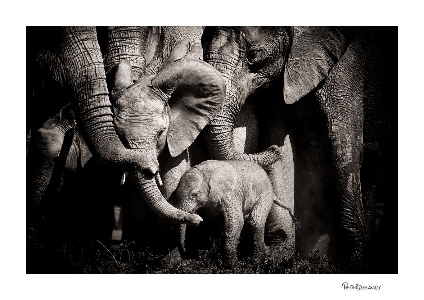 no-19-elephant-family.jpg