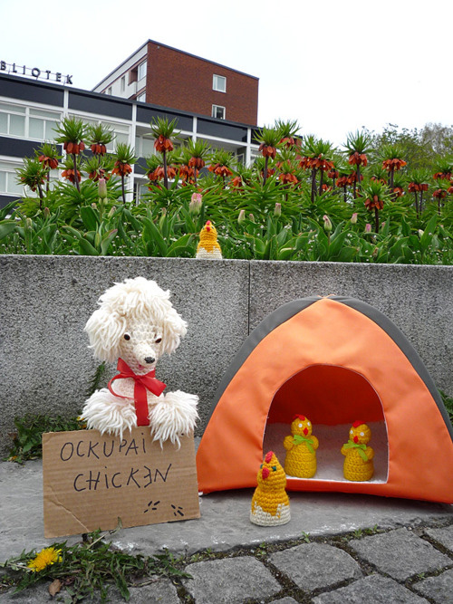 occupy-chicken-sjobo.jpg