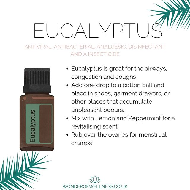 Ahh Eucalyptus Oil. The main chemical components are eucalyptol and alpha-terpineol, making it an ideal oil for creating a soothing massage experience. Eucalyptus promotes feelings of relaxation and relieves tension. It also has properties that can be beneficial for the skin.⠀⠀⠀⠀⠀⠀⠀⠀⠀ ⠀⠀⠀⠀⠀⠀⠀⠀⠀ Our wonderful members can get this Oil free this month too!!