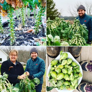 Here John and Nash harvest Brussels sprouts for the Thanksgiving feast at Walnut Hill Farm.