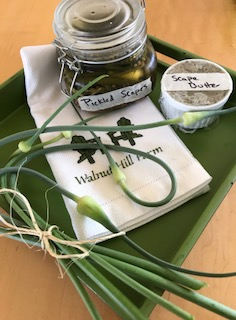 and that means Garlic Fest is not far behind!  What elegant looking dividends from our garlic plants...and so tender and delicious! Chef Payson at Calihan Catering is pickling them and making incredible compound butters. Thank you, Chef!