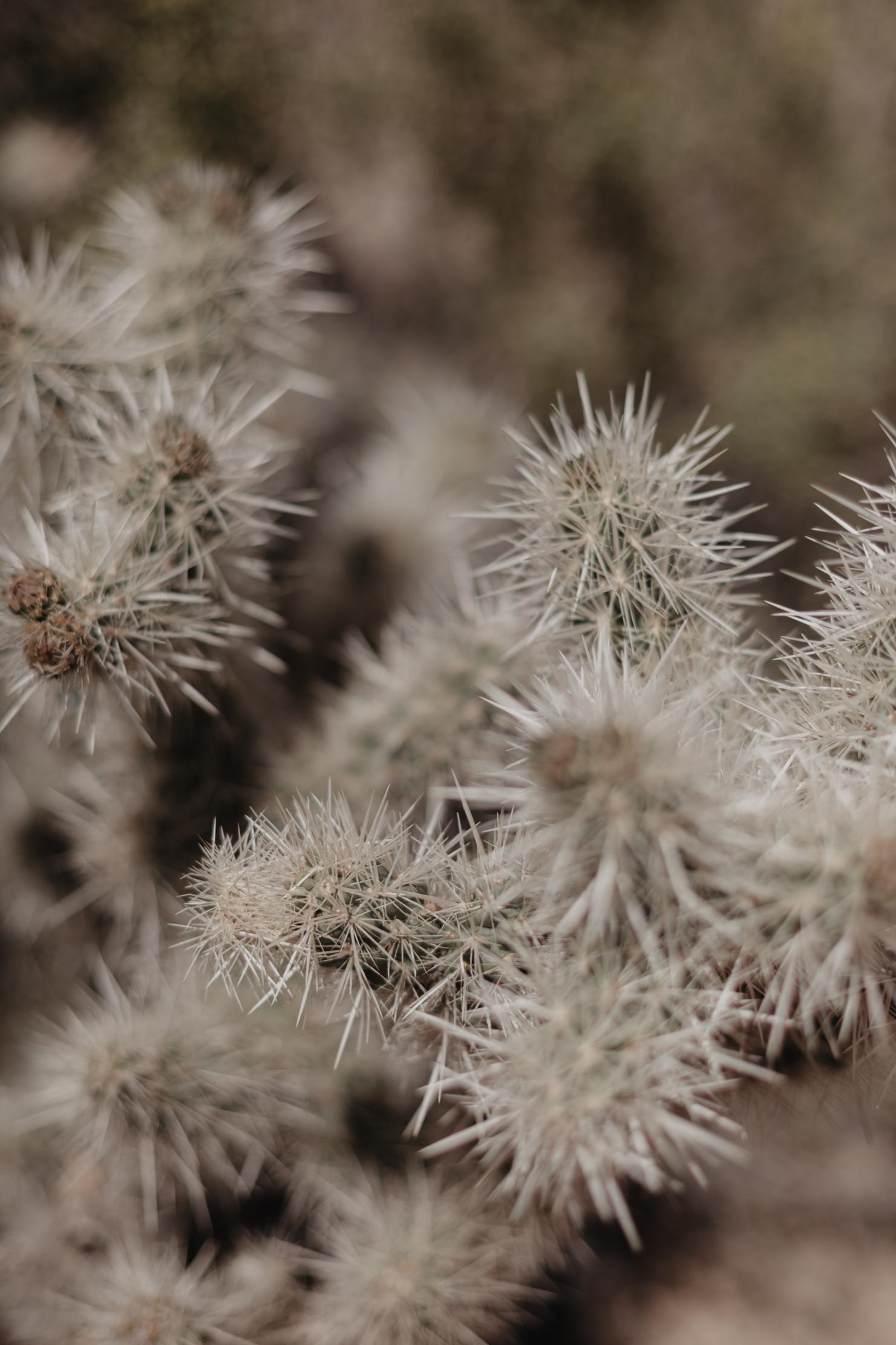 Joshua Tree National Park | Adventure Photographer