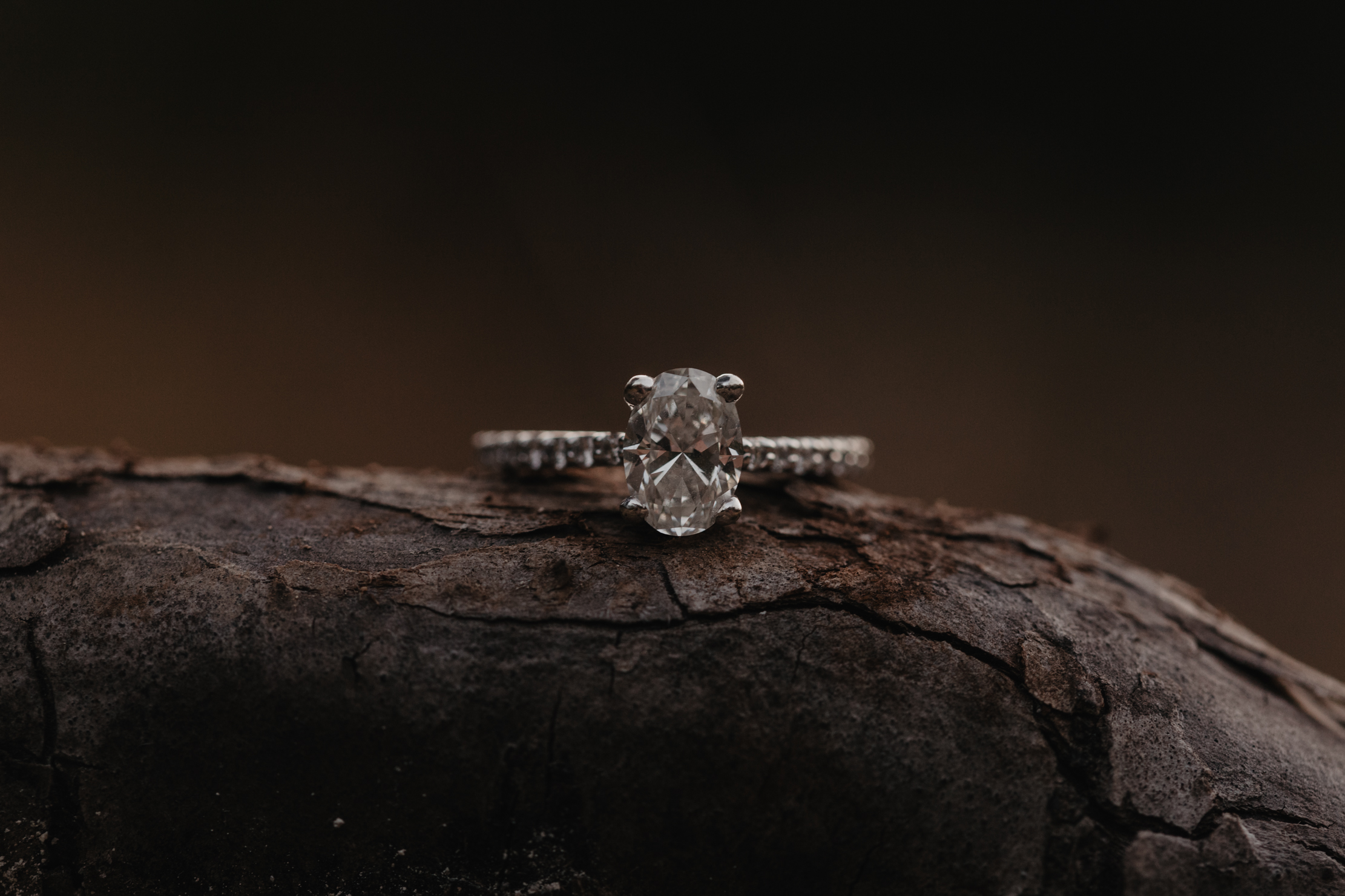 Ijams Nature Center Engagement | Knoxville Wedding Photographer
