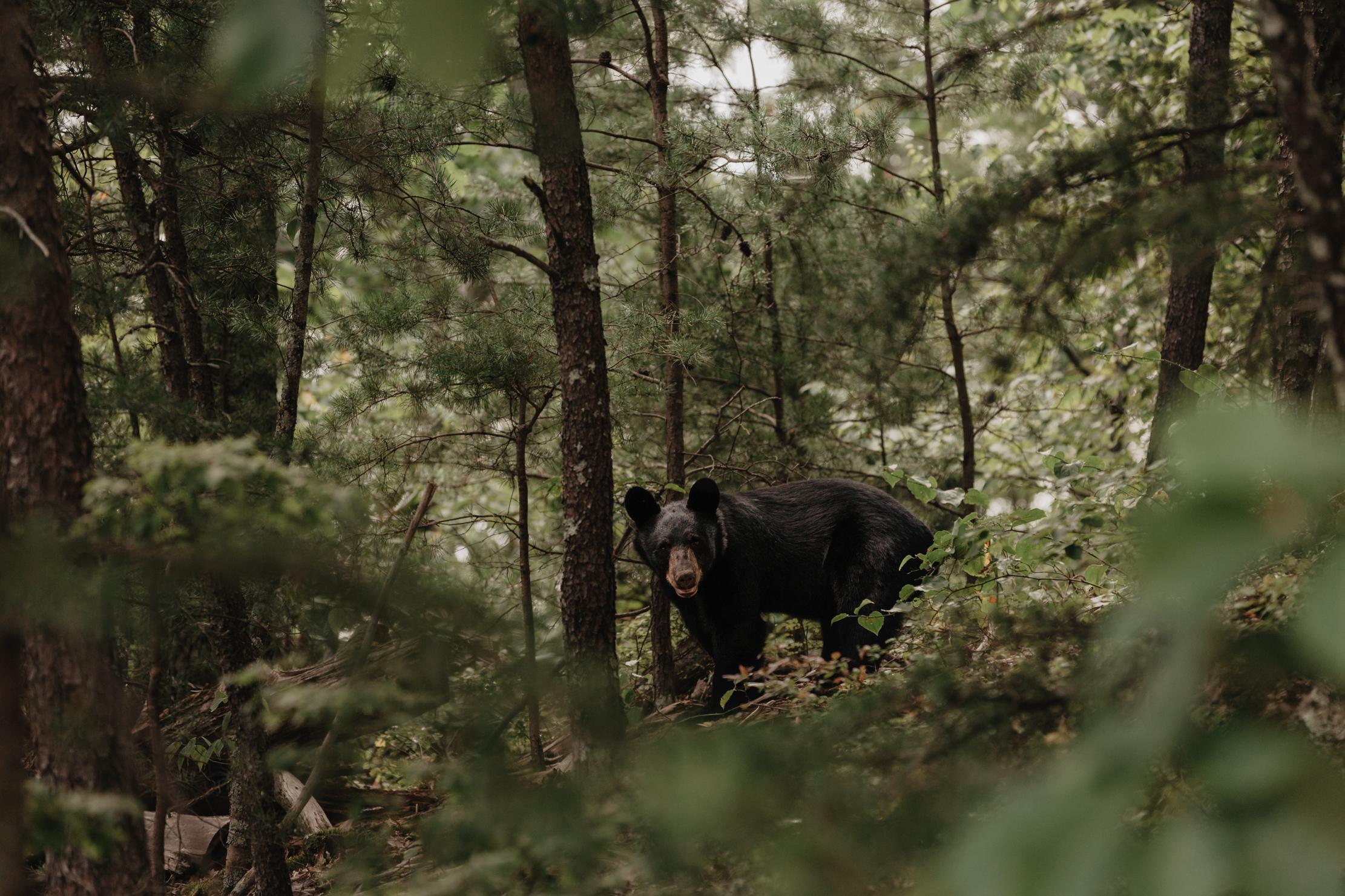 The Magnolia | Smoky Mountains Wedding Photographer