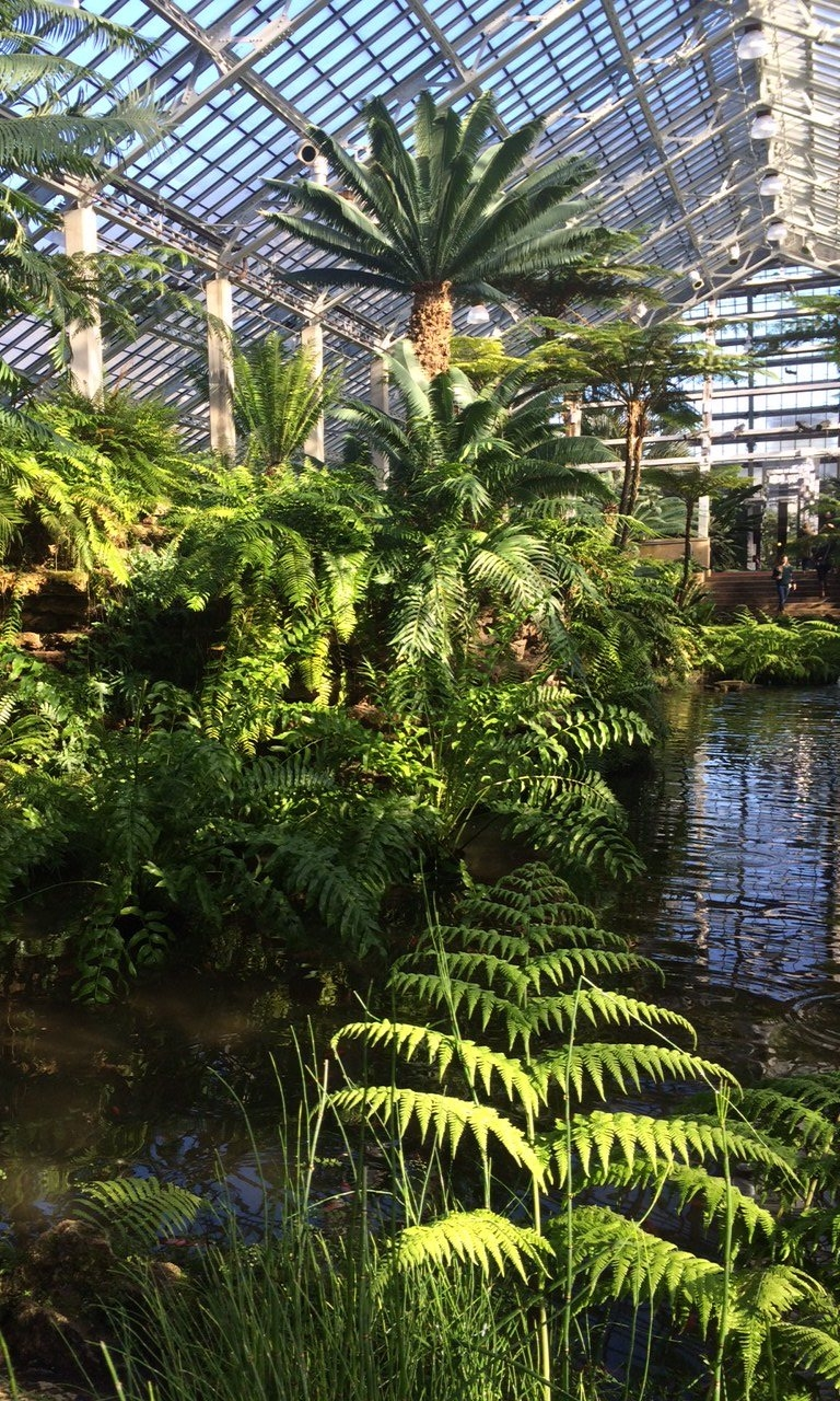 """Visit to Garfield Park conservatory during an """"art date"""" with Spertus Studios"""