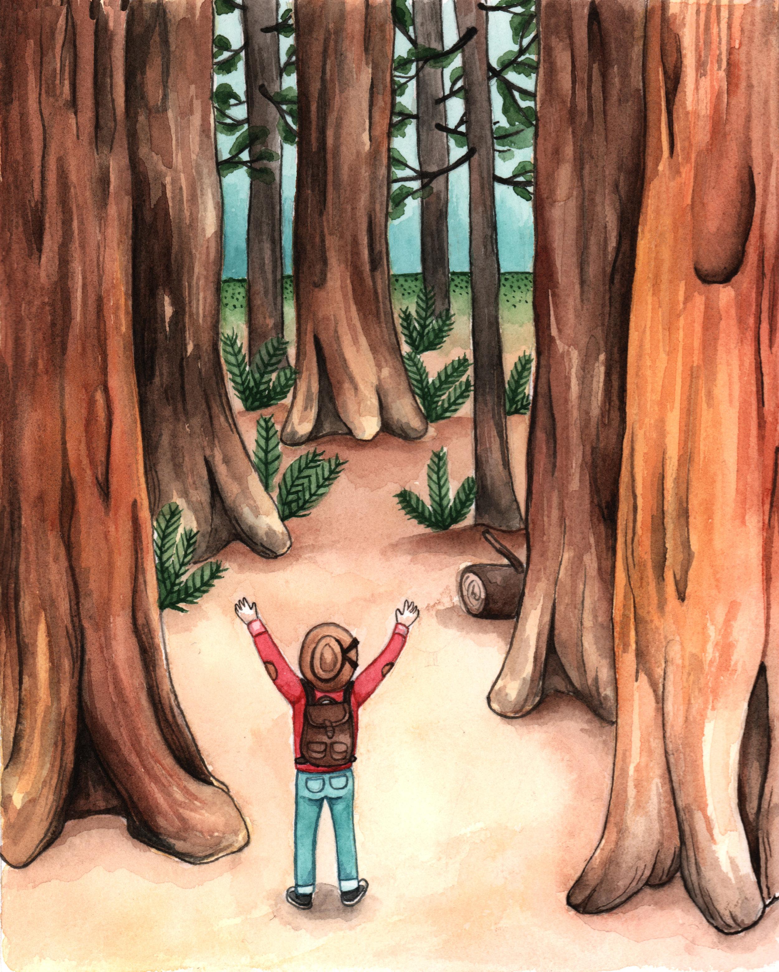 redwoods copy 2.jpg