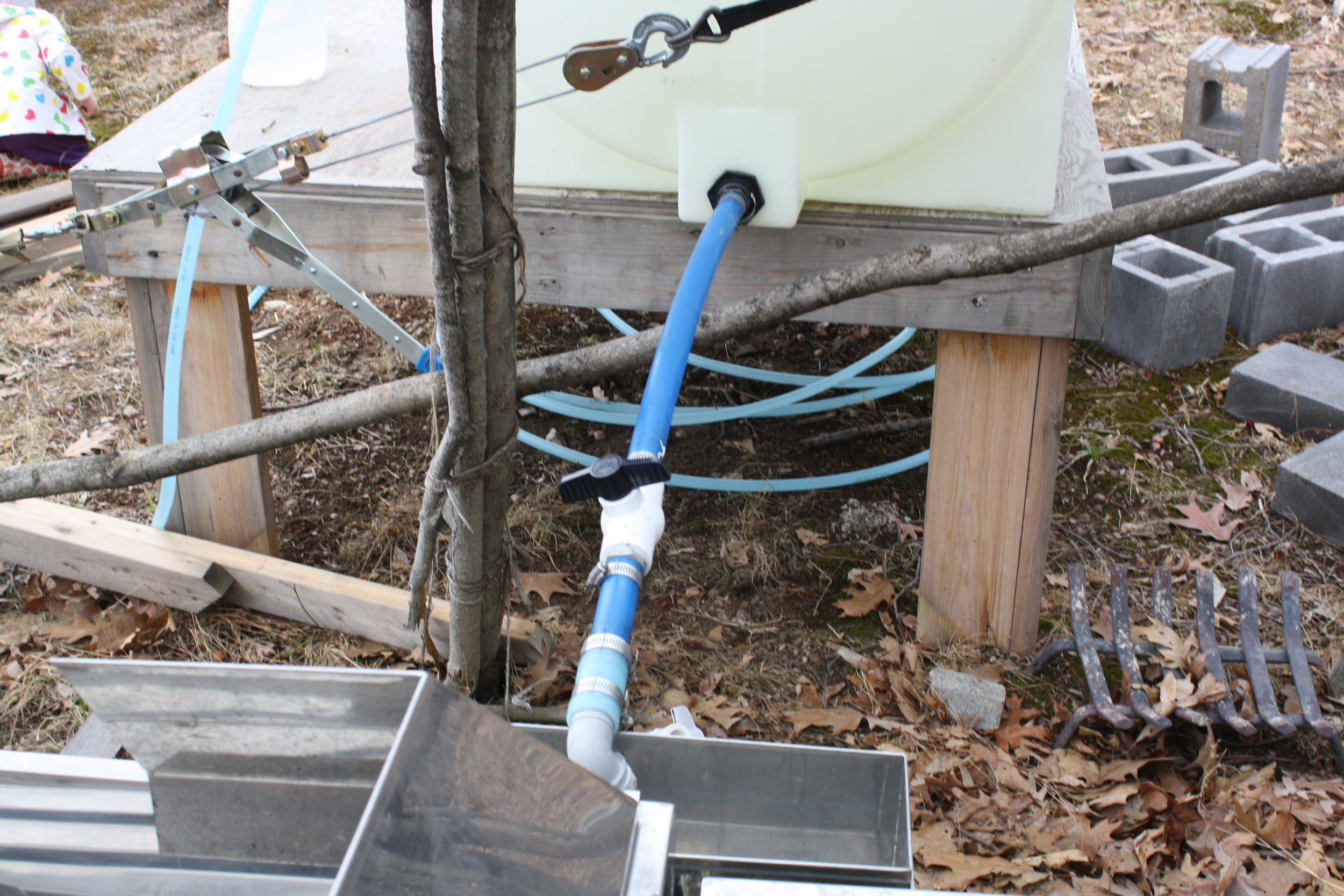 Hoses leading to the giant trough of sap and then it will be poured into....