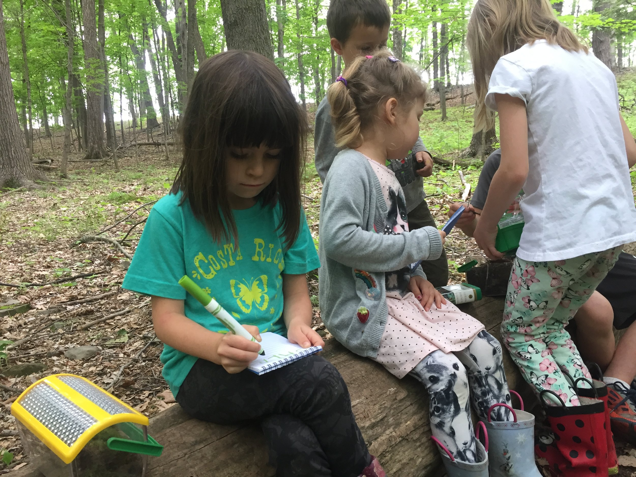 Observations and recordings in the forest