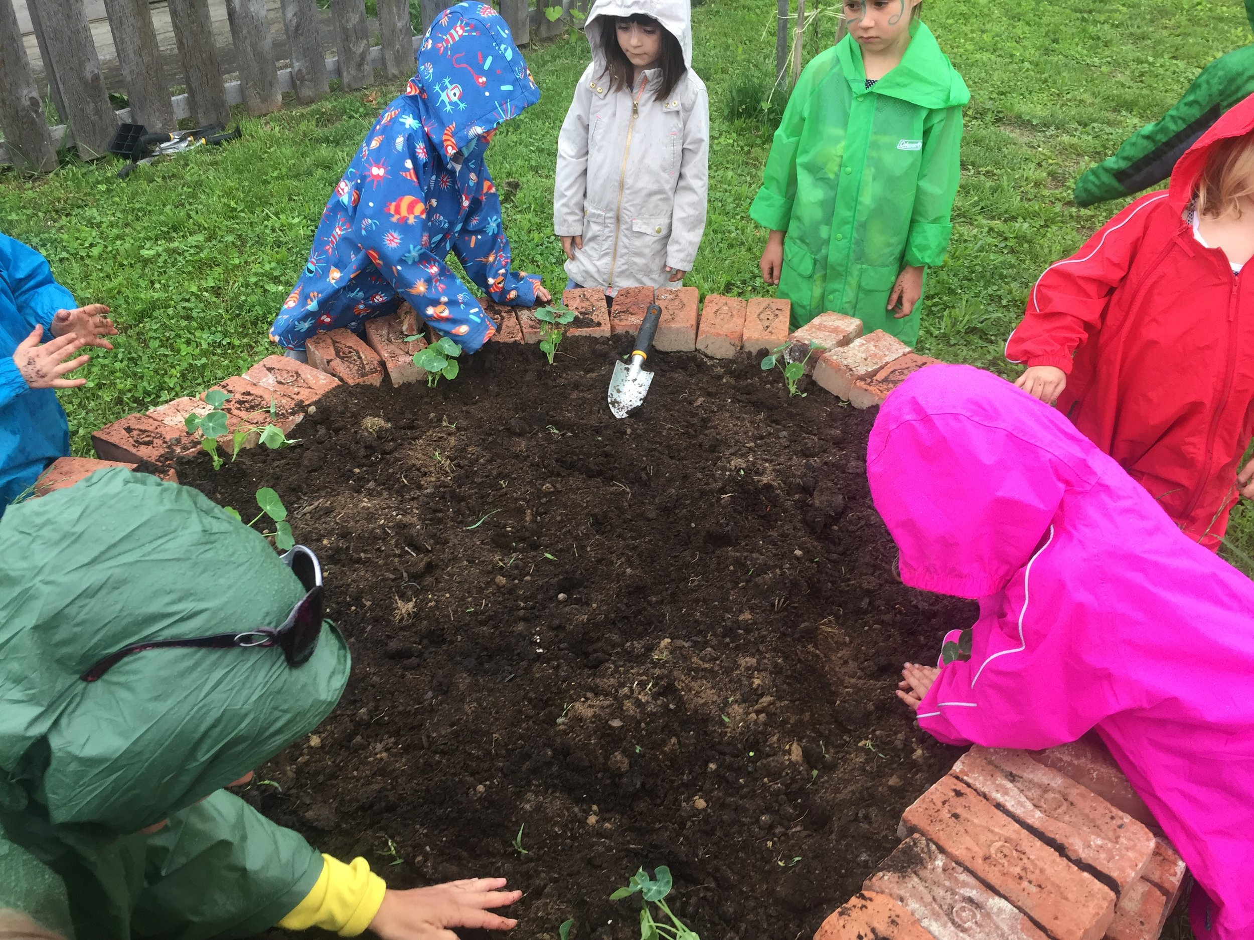 Planting the three sisters and of course, brother Nastursium