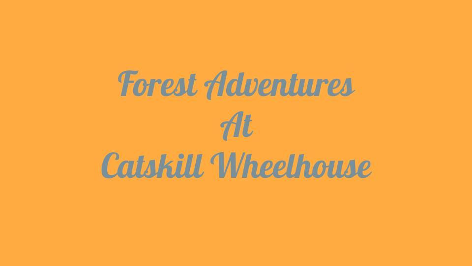 Forest Adventures 1.jpg
