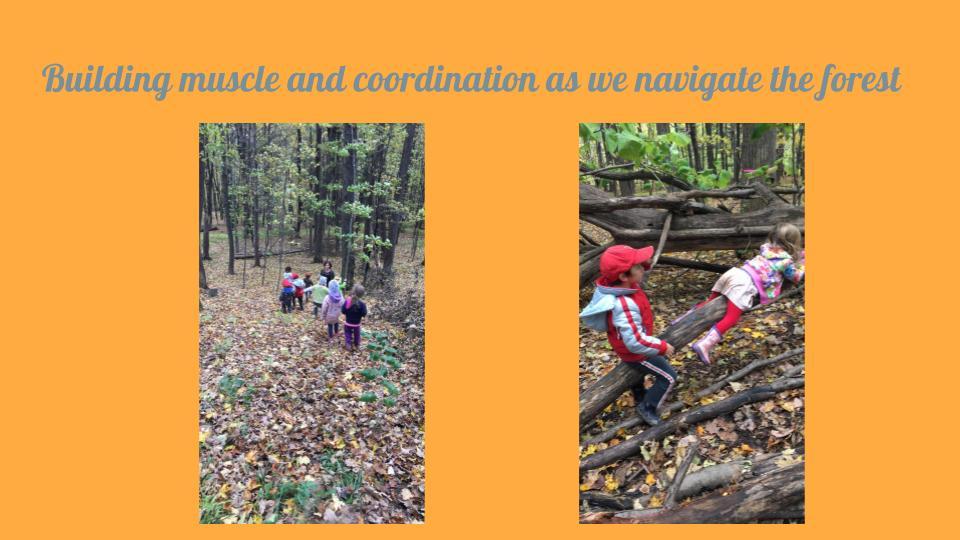 Forest Adventures 2.jpg