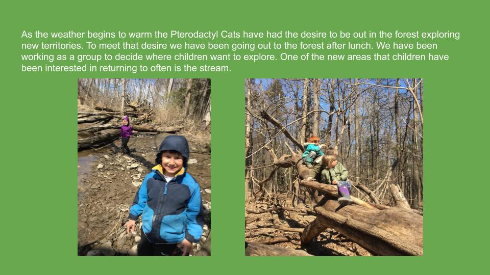2Springtime Forest Explorations with the Pterodactyl Cats.jpg