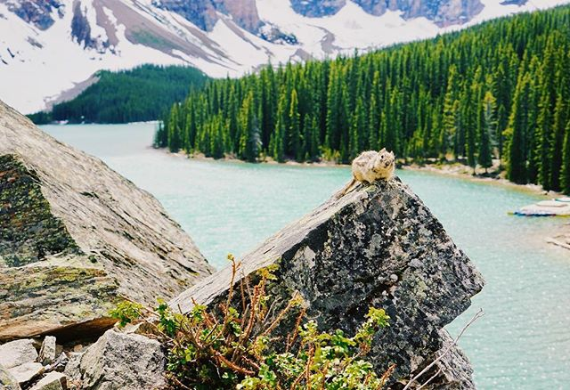 Squirrel!!!! #canadianrockies #lakemoraine #🇨🇦 #wildlifephotography