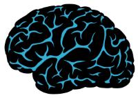 Brain #1.1.jpg