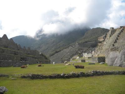 Happy alpacas, Machu Picchu