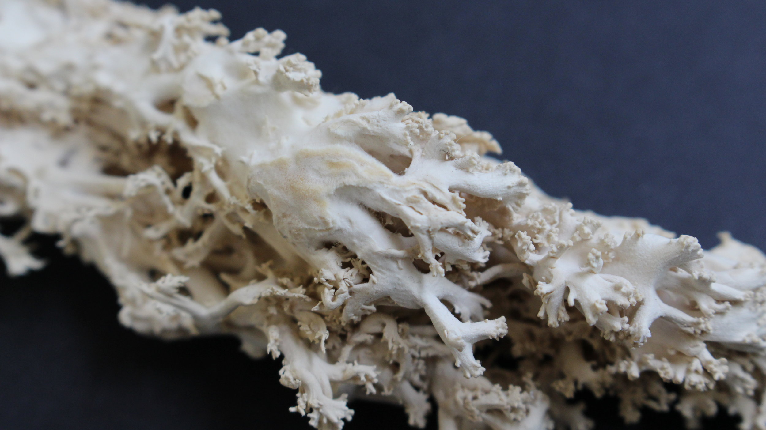 01_asselin_mycelium_growth_1.jpg