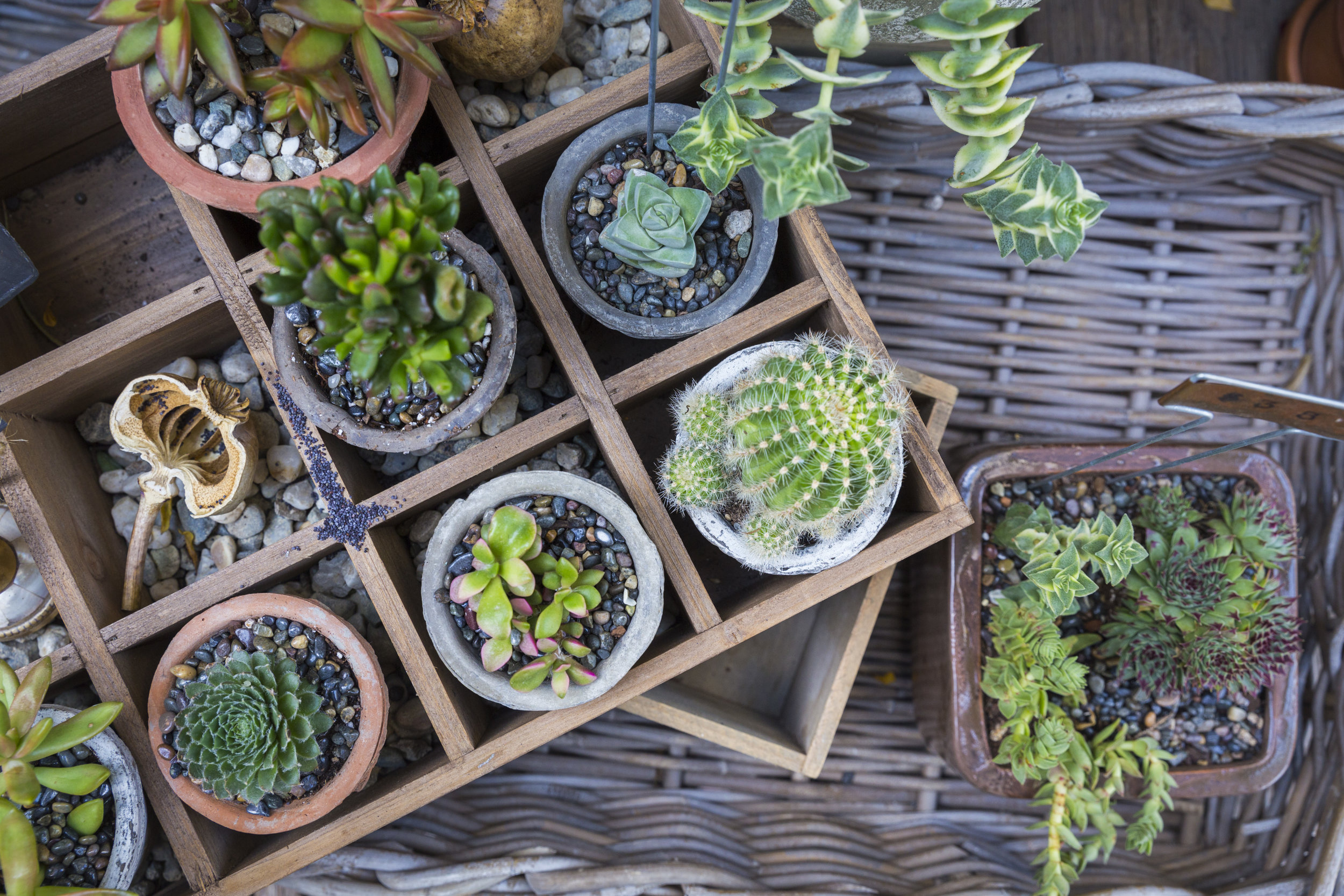 *variety of succulents in hand-thrown pots