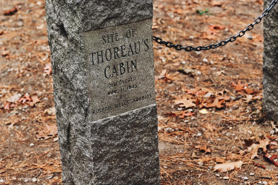 The Lovely Cicada | Our Trip to Walden Pond & Thoreau's Cabin