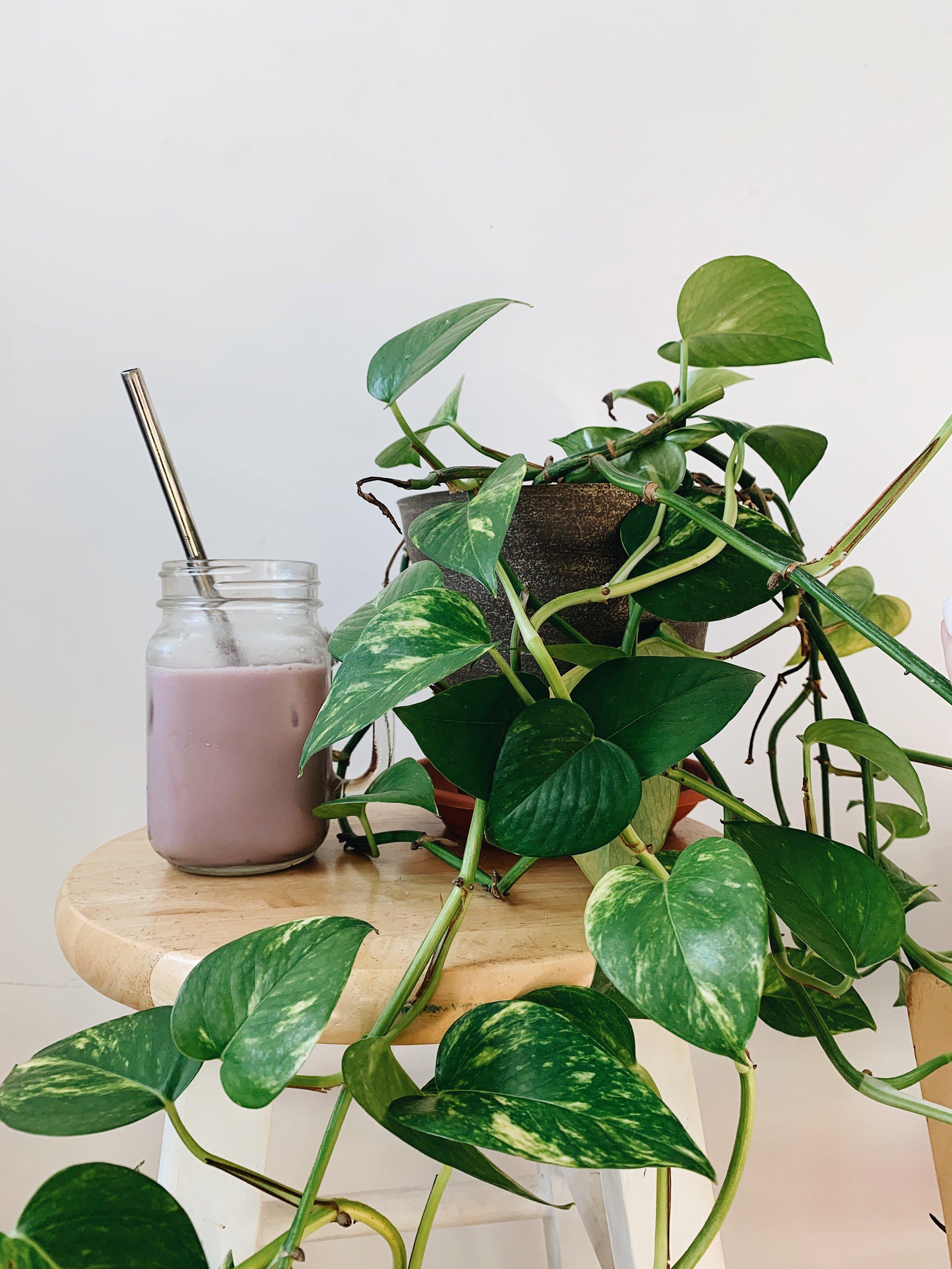 Starbucks Copycat: Quick, Cheap, Healthy & Delicious Lavender Drink