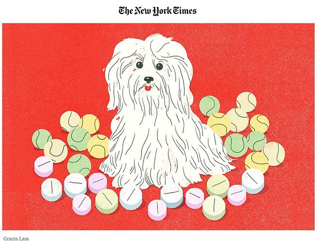 """""""Keeping an Older Dog Vibrant"""" for @nytimes out today ✨ #olddogs #pills #janebrody"""