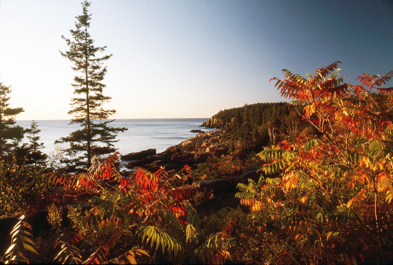 Fall at Otter Cliffs