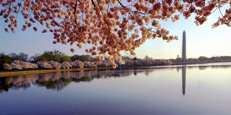 Blossoms at the Basin