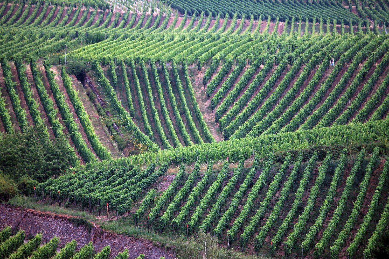 Geometry of the Vines