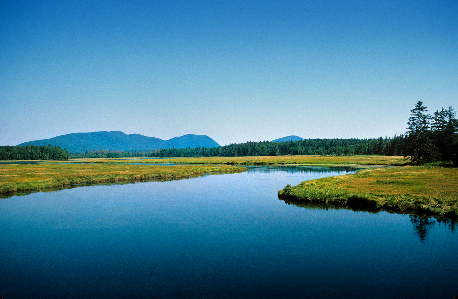 The Bass Harbor Marsh