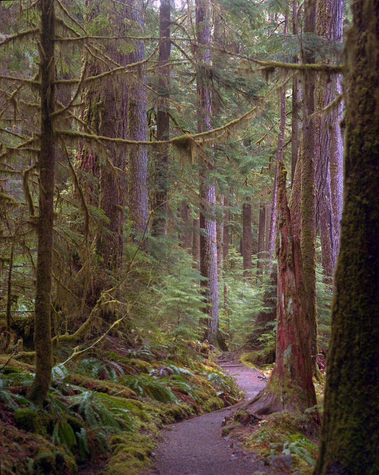 The Path through Hoh