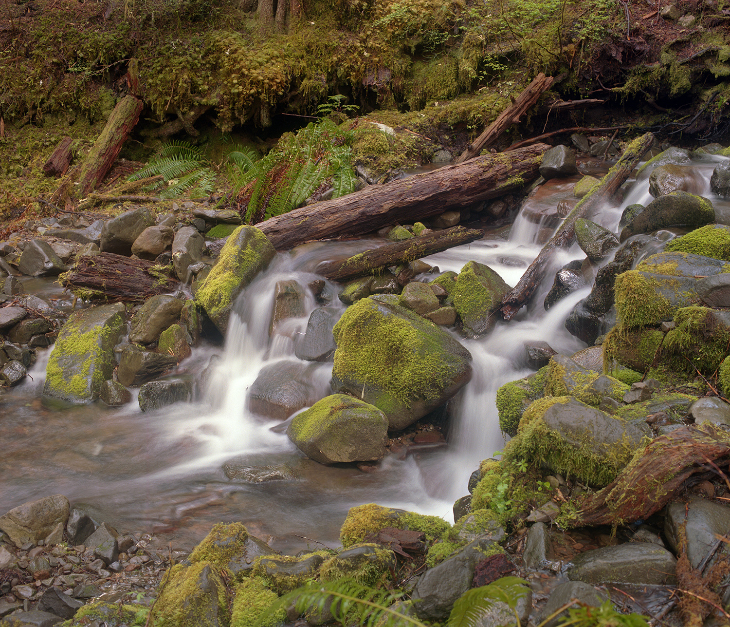 The Stream at Sol Duc