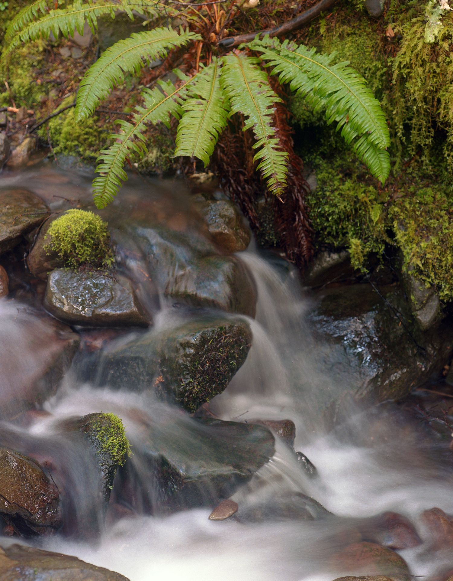Ferns and Stream