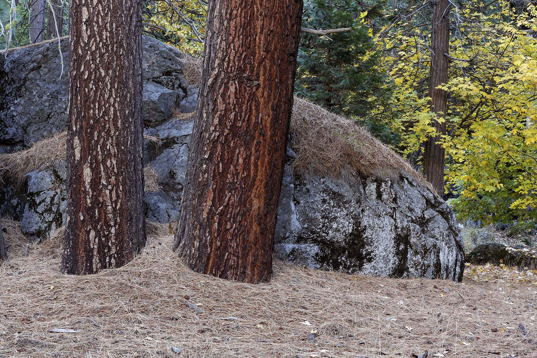 08023_Ponderosas-boulder-7101_1500pxM.jpg